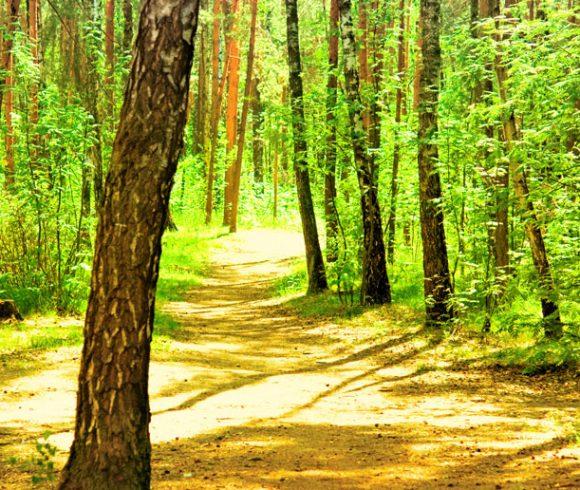Cosenza più salutare grazie anche a Ecologia Oggi