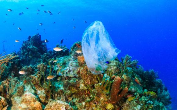 Come la plastica sta uccidendo i nostri mari